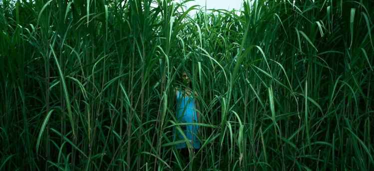 in-the-tall-grass-cover